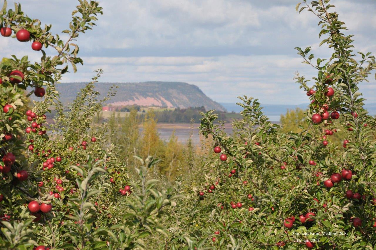 The view from a Kings County farm showcases the productive and beautiful landscape of the Annapolis Valley, where a remarkable combination of creativity and natural assets is creating new opportunities for culinary tourism. Photo © D. Killam
